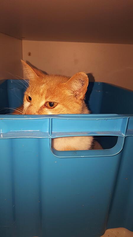 Pension pour chat en Vendée au Domaine du Chigny